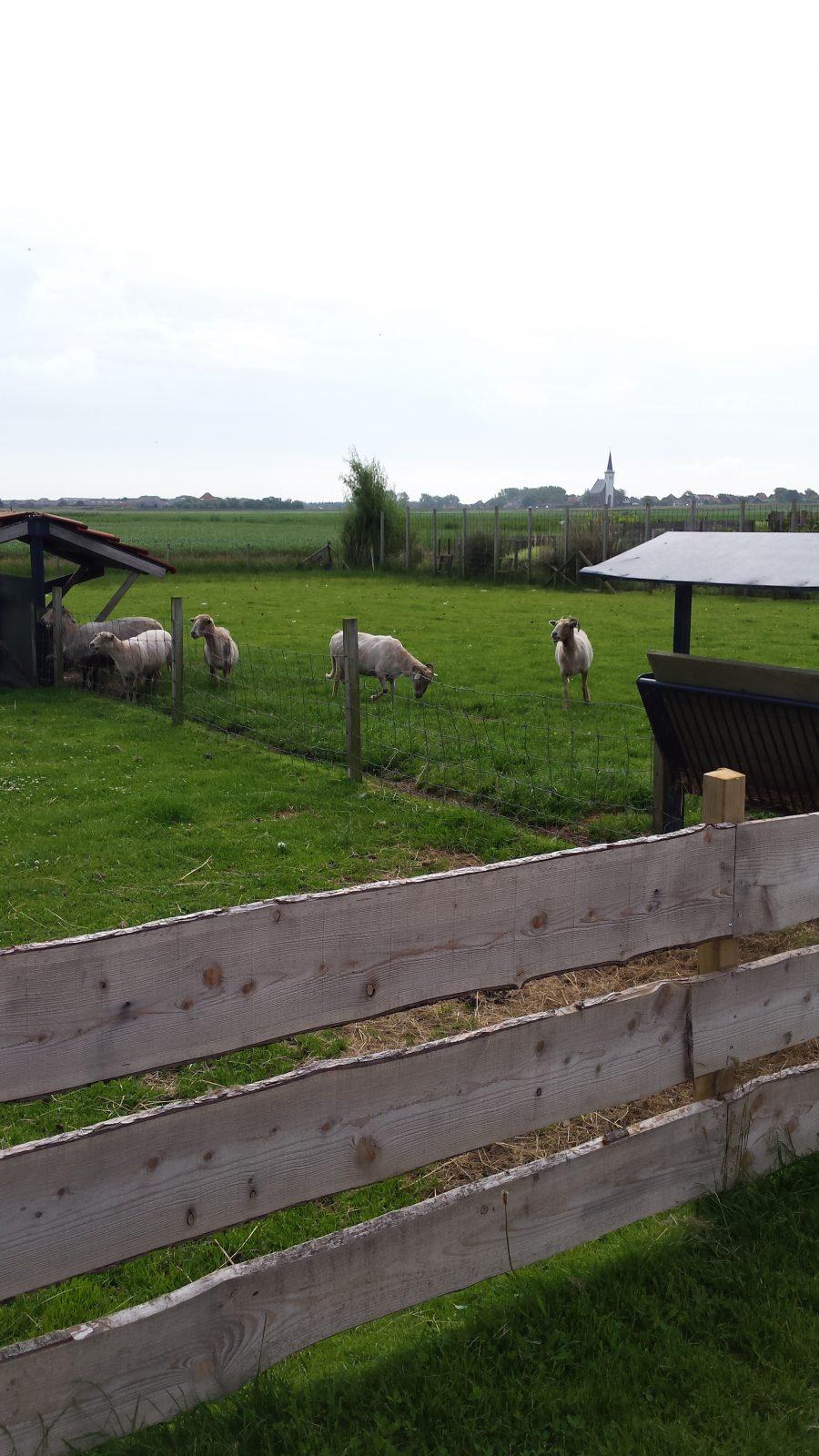 #32659923634048 Landgoed De Bonte Belevenis (Kindercollectie) Mooi Noord Holland Aanbevolen Design Meubelen Noord Holland 1719 afbeelding/foto 232241281719 beeld
